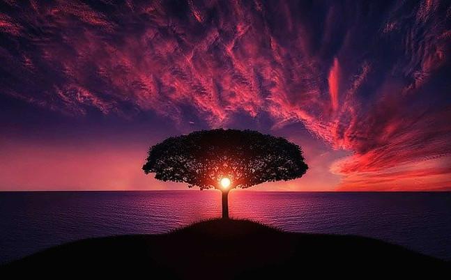 sunrise behind tree