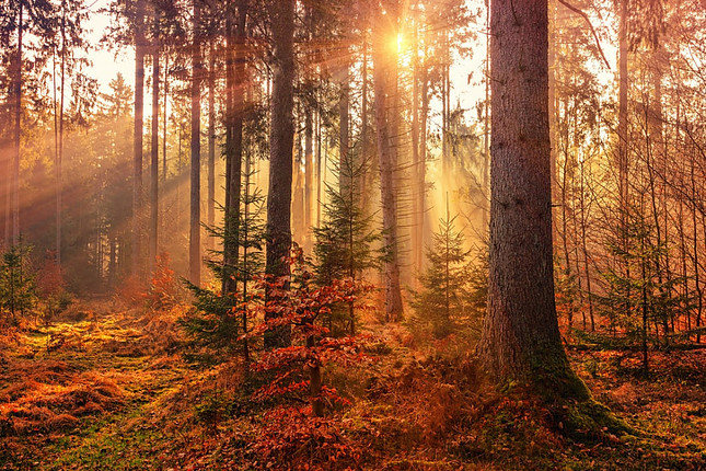 Fall forest with the sun shining through the trees