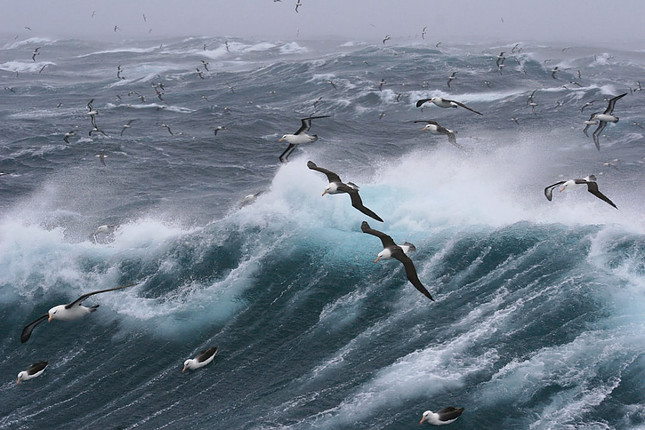 Image shows a raging sea with pelicans flying over it