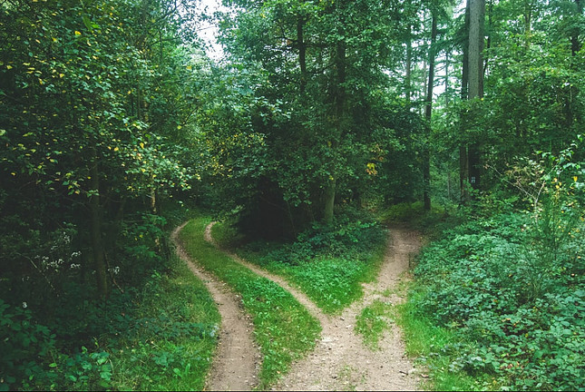 Image shows two diverging paths in a lush forest