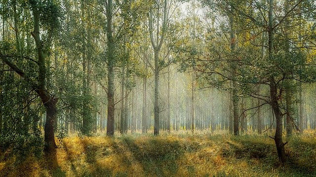 Image shows a forest with sunlight shining through the trees